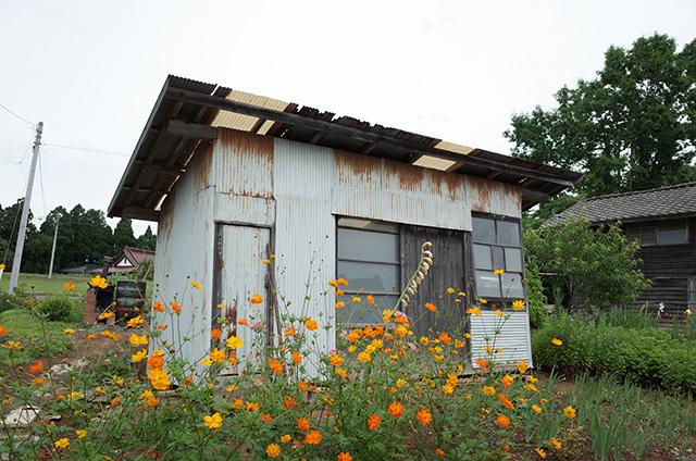 Kesennuma Oshima - neighboring field in Derek Jarman's garden style -  Hidemi Shimura
